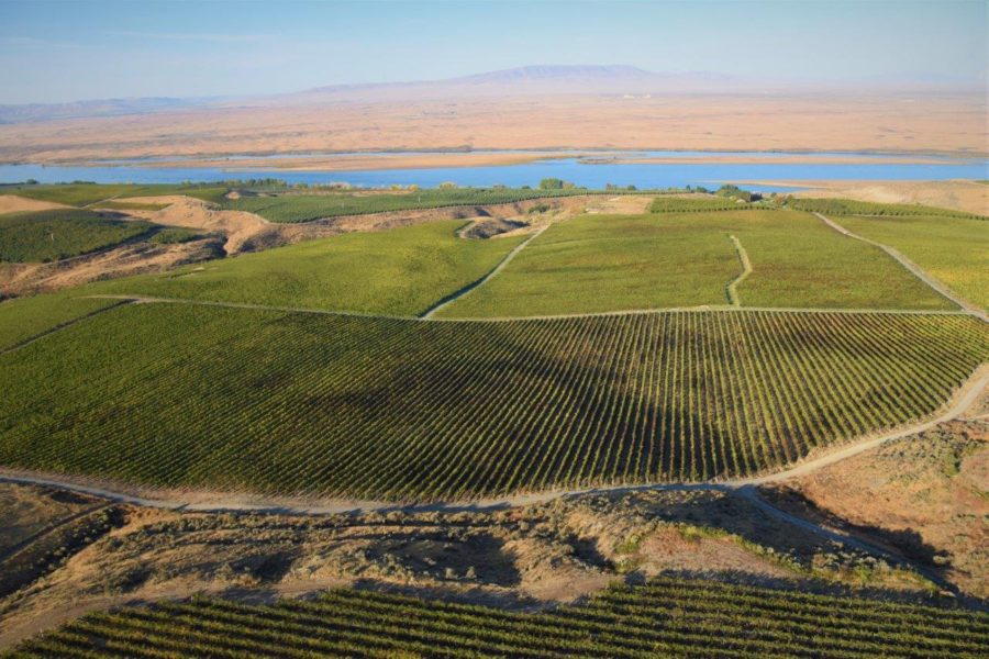 Sagemoor Vineyards aerial shot